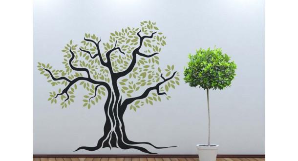 Oude olijfboom